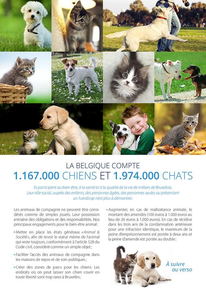 Statut et Place des animaux domestiques en Belgique et à Bruxelles.