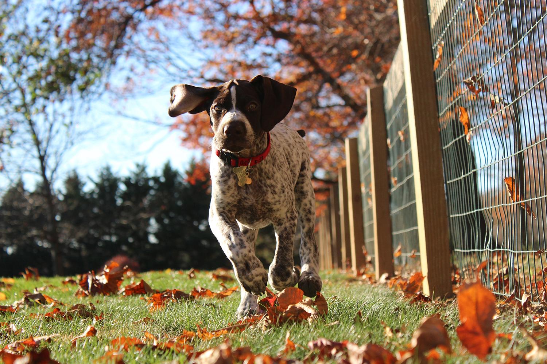 """RDV avec votre chien dans le quartier """"Jonction"""" !"""
