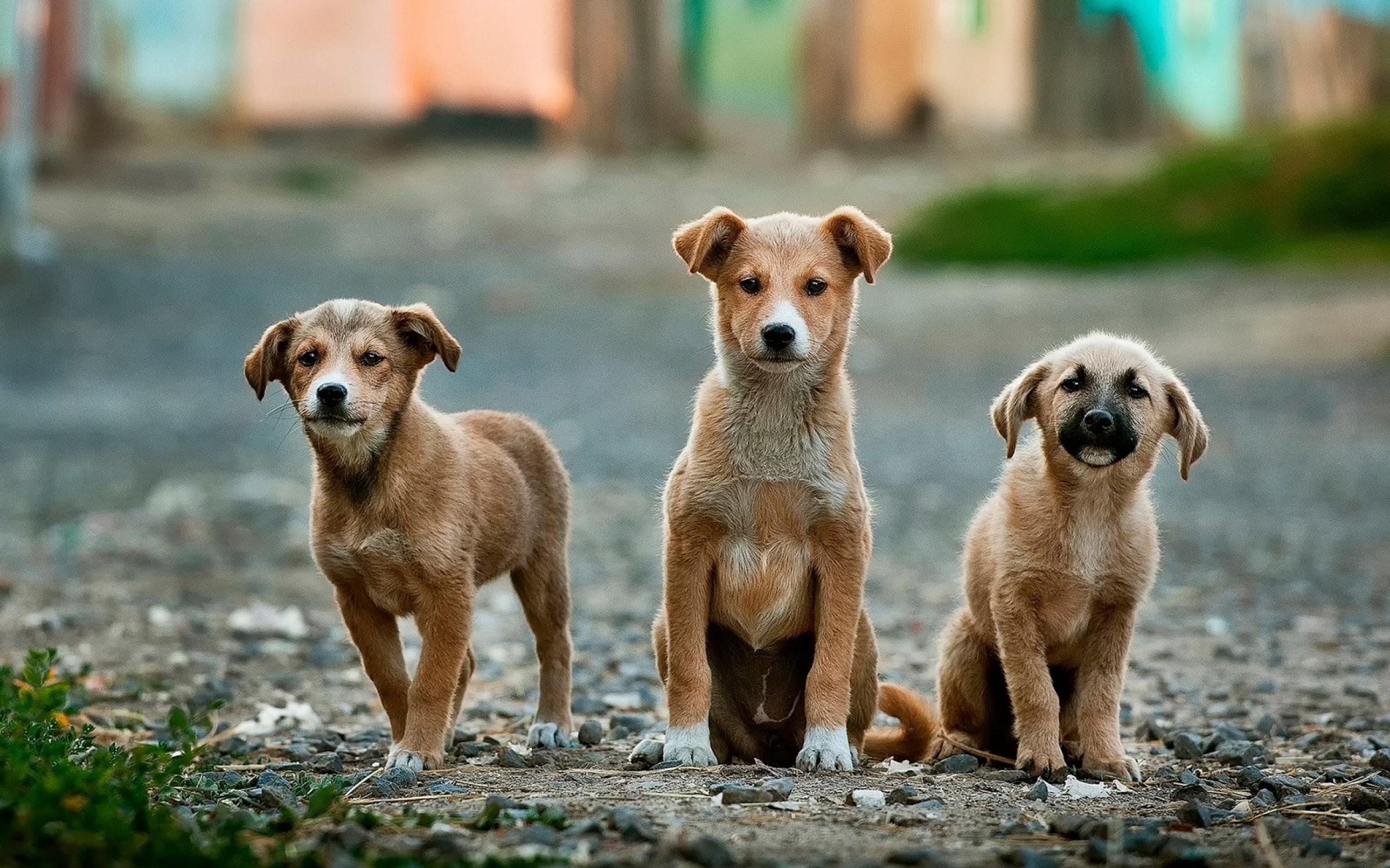 Proposition de résolution sur le nombre d'espaces de liberté pour les chiens